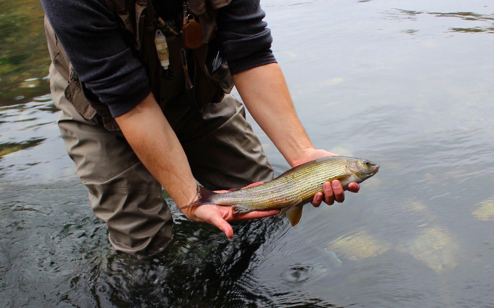 Ribolov na rijeci Uni